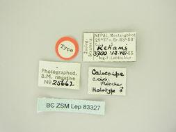 Image of <i>Hydria acis</i>