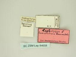 Image of <i>Emmiltis pygmaearia teriolensis</i>