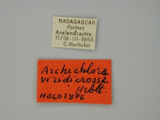Image of <i>Archichlora viridicrossa</i> Herbulot 1960