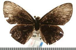Image of Alesa