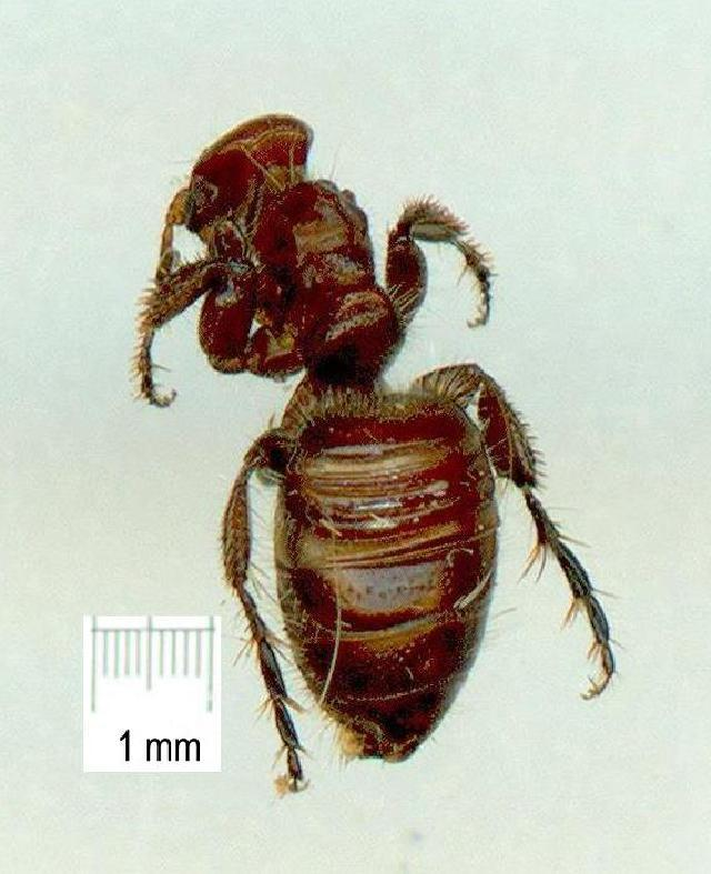 Image of Epactiothynnus