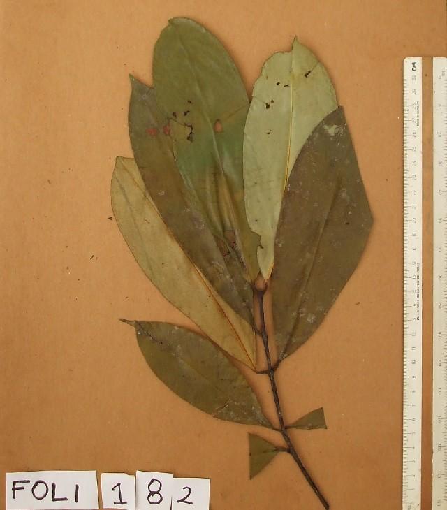 Image of pentadesma