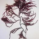 Image of <i>Agardhiella subulata</i>