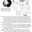 Image of <i>Parasola hemerobia</i> (Fr.) Redhead, Vilgalys & Hopple 2001