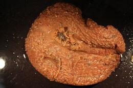 Image of <i>Liponema brevicorne</i> (Mc Murrich 1893)
