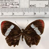Image of <i>Paralaxita orphna laocoon</i> de Nicéville 1894