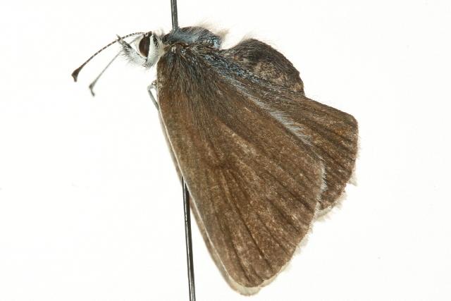 Image of <i>Aricia nicias</i>