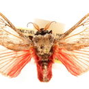 Image of Aididae