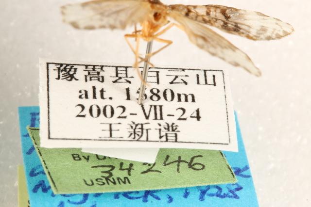 539.lnaut ccdb 22939 c06 label 1401207960 jpg