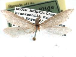 Image of <i>Prototheora quadricornis</i> Meyrick 1920