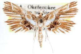 Image of <i>Undulambia striatalis</i> Dyar 1906