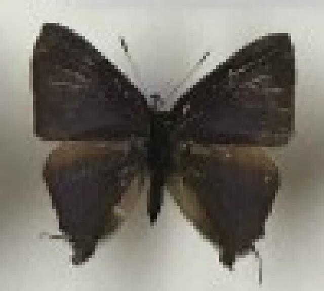 Image of Rapala