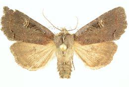 Image of Hillia