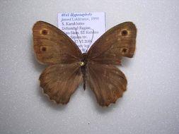Image of <i>Hyponephele jasavi</i>