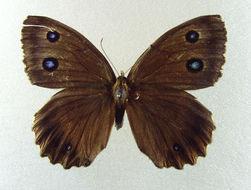 Image of Minois