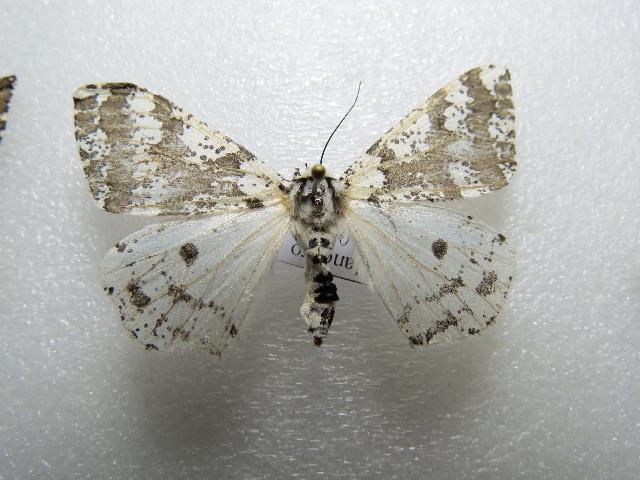 Image of Arichanna
