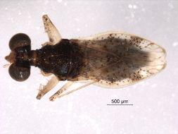 Image of spiny-legged bugs