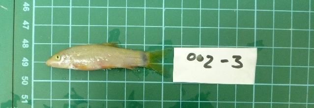 539.mek yasuhikotakia lecontei cmgg2012230 1368197440 jpg