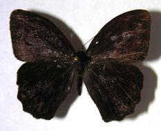 Image of <i>Magneuptychia tiessa</i>