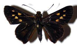 Image of Molo
