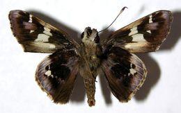 Image of Vacerra