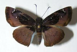 Image of Zera