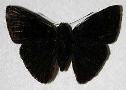 Image of Iliana