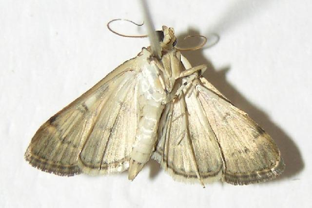 Image of Bicilia