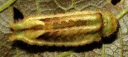Image of Panthiades