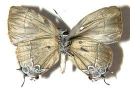 Image of Symbiopsis