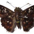 Image of Udranomia