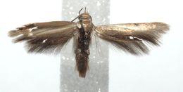 Image of skythriBioLep01