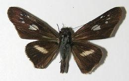Image of Zenis