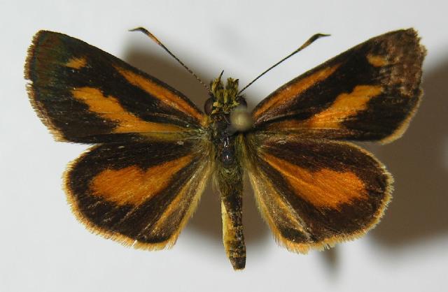 Image of Lento
