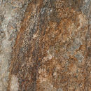 Image of ratapple