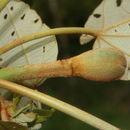 539.mhpac biobot06691 bb030127 1351010360 jpg.130x130