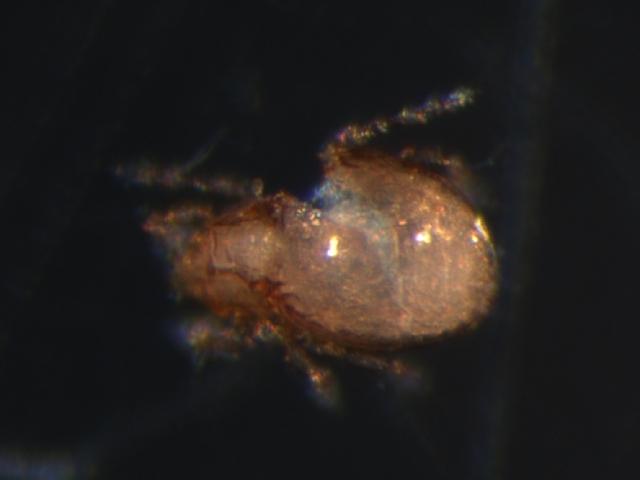 Image of Quadroppia