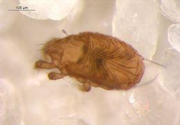 Image of Eupelops