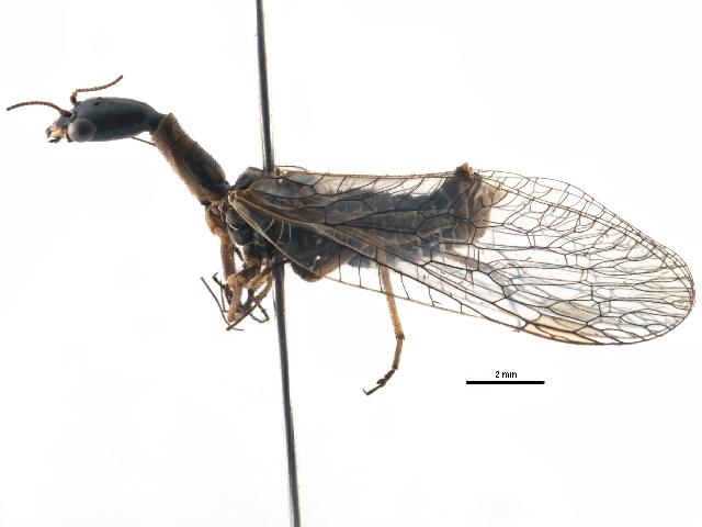 Image of Agulla