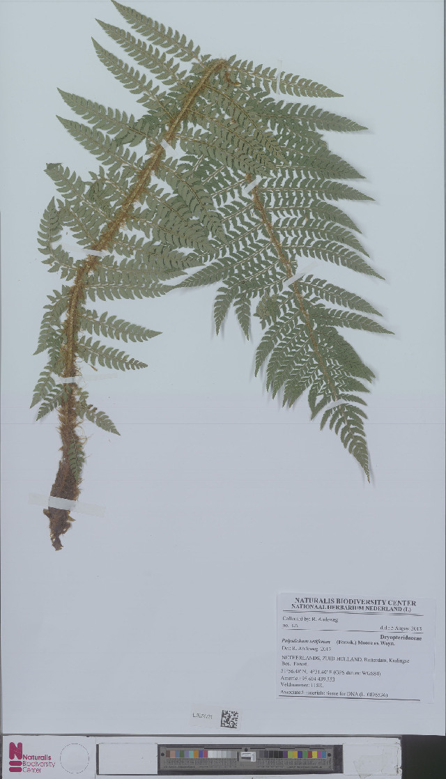 Image of hollyfern