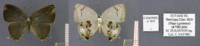 Image of Iaspis