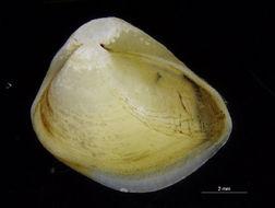 Image of Myoida
