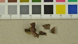 Image of <i>Thelephora caryophyllea</i> (Schaeff.) Pers. 1801