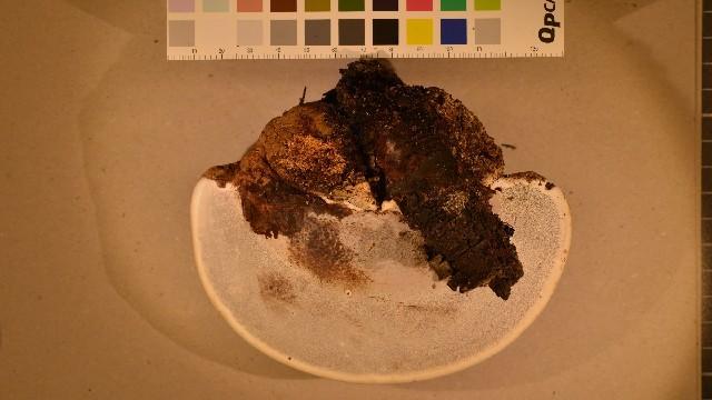 Image of Artist's fungus