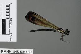 Image of Heliocypha Fraser 1949