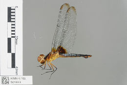 Image of Jungle-skimmers