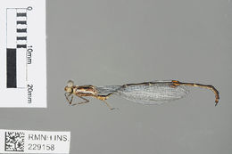 Image of White Malachite
