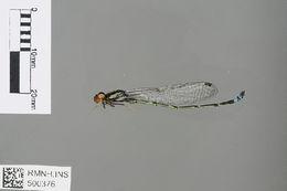 Image of Swarthy Sprite
