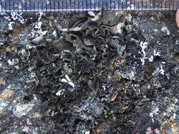Image of skin lichen
