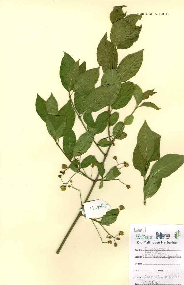 Image of Spindle